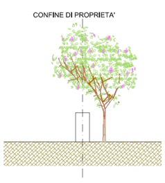 muro basso albero